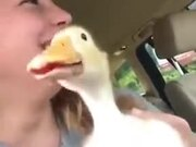 The Lip-Syncing Rapper Duck