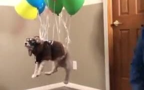 When Your Dog Dreams To Fly