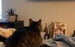 Cat's Reaction To An HD TV