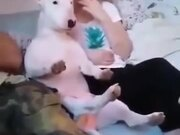 Dog Enjoying A Movie With The Family