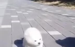 Fluffy Puppies Ready To Fly