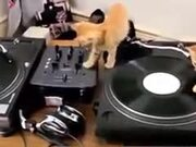 Kittens Learning To Deejay