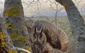 When You Invade The Privacy Of An Owl
