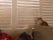 Cat Is Ready To Take Human On