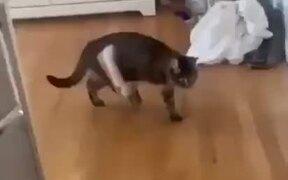 Cat Loves To Wear A Shoe