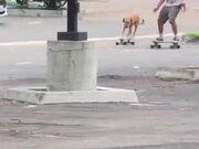 Dog Skateboarding With His Human