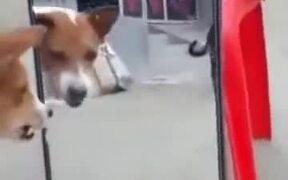 Dog Barking At The Mirror