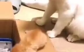 Cat Mother Showing Tough Love