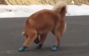 Dog Does Not Like Running Shoes