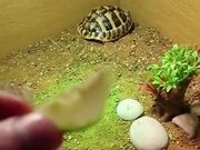 Food Can Break The Sleep Of Tortoise