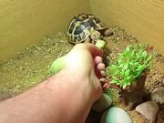 Food Can Break The Sleep Of Tortoise
