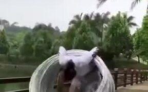 Insane Amount Of Hula Hoops