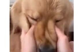 Big Dog Getting Cheek Squished