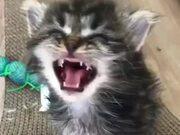 Kitten Communicating With Another Kitten