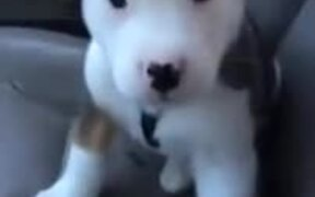 Puppy Getting Cute Hiccups