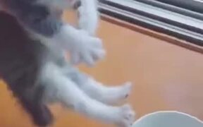 A Very Hungry Kitten