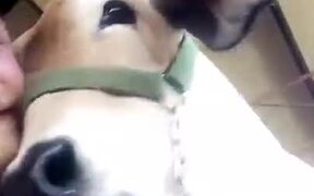 A Cow That Loves Selfies