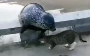 Cat Mercilessly Slapping A Seal