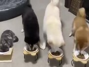 An Obedient Bunch Of Pets