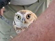 The Head Rotation Of An Owl