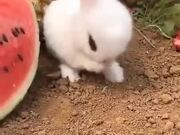 Cutest Rabbit You Can Find