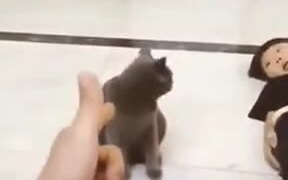When Your Cat Is A Good Actor