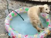A Dog Too Excited To Have A Small Water Pool