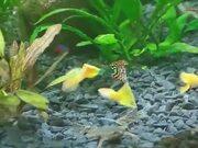 Funny Aquatic Frog