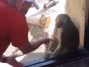 Monkey Amazed By A Magic Trick