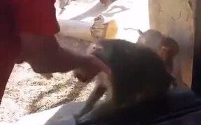 Monkey Amazed By A Magic Trick