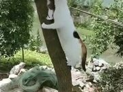 Cat Mother Rescuing A Kitten