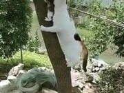 Cat Mother Rescuing A Kitten