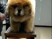The Biggest Fluffball