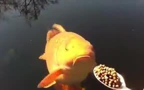Spoon Feeding Fishes