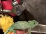 When Chameleon Finally Finds Water
