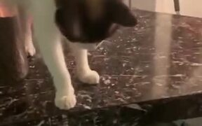 Cat Loves To Drop A Bowl