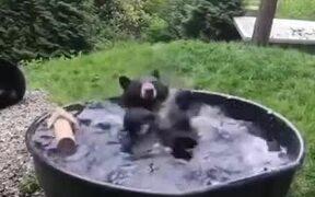 A Black Bear Bathing In Pool