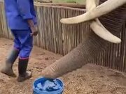 How Elephants Drink Water
