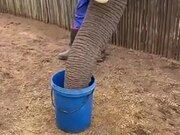 How Elephants Drink Water