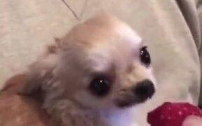 Cutest Dog Video