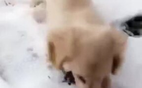 Puppy Too Happy In The Snow