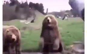 Friendliest Bear Ever