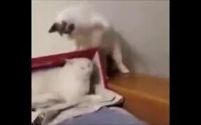 Mean Cat Slapping Hard
