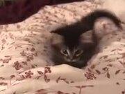 A Restless Cute Kitten