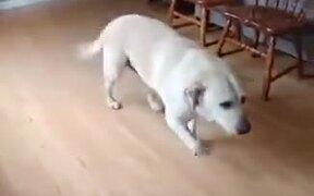 Dancing Dog Deserves A Musical Edition