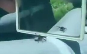 Fooling A Spider Using A Mirror