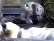 Otter Enjoying Water