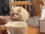 Cat's Epic Reaction To Ice-Cream