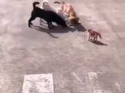 One Cat Vs Three Dogs