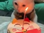 How To Celebrate A Cat's Birthday